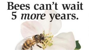 EU una cruzada nacional a favor de las abejas