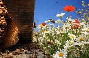 http://thebeephotographer.photoshelter.com/gallery/New-Flying-honeybee-special-effect/G0000_JH.McqTZ4E