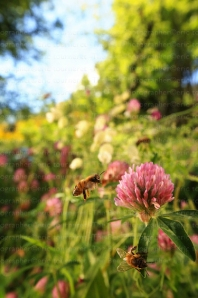 http://thebeephotographer.photoshelter.com/gallery/New-Flying-honeybee-special-effect/G0000_JH.McqTZ4E